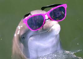 dolphin in sunglasses